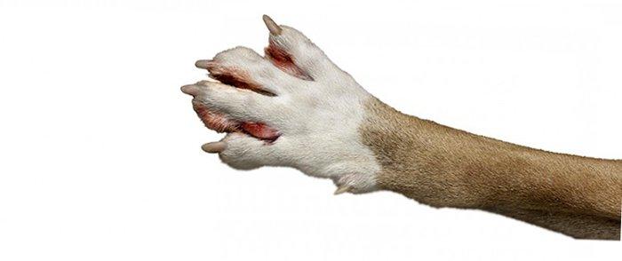 Dog Hot Spot