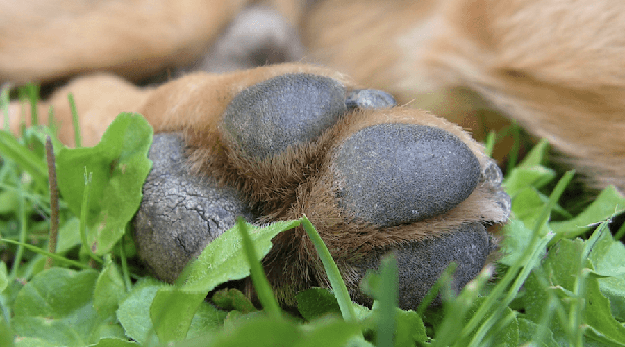 dog rough paws