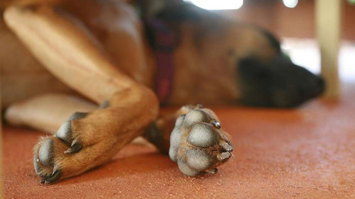 cracked paws