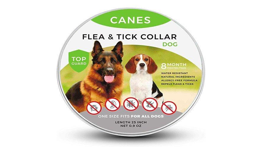 Canes Flea Collar