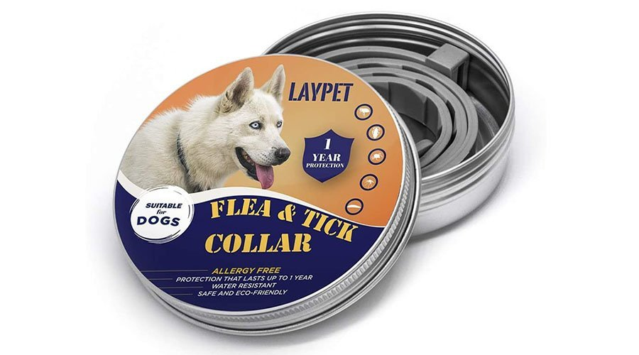 Laypet Flea and Prevention
