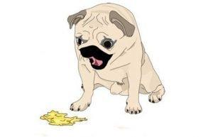 vomiting-in-dog