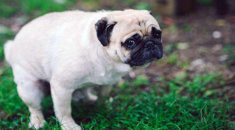 specks in dog poop