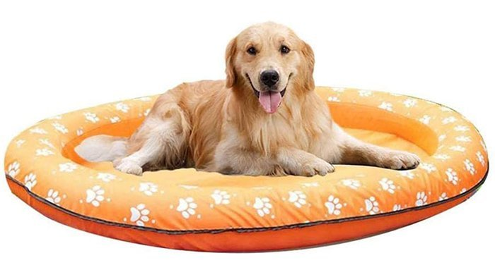 Rxan Dog Pool Float