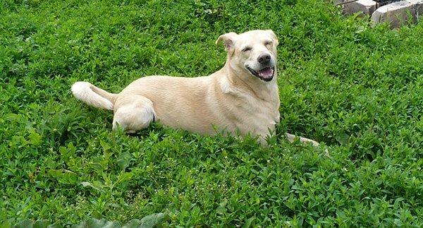 housetrained dog