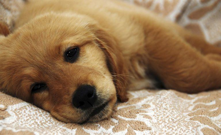 Dog-ringworm-treatment-home-remedy