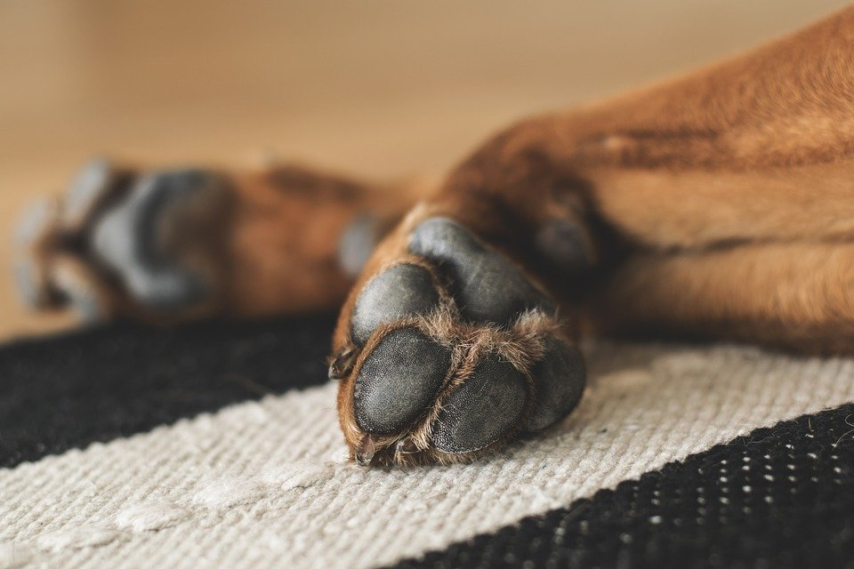 Dog Chewing Paws